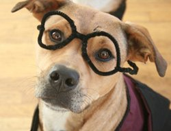 Harry Potter Dog Costume-10