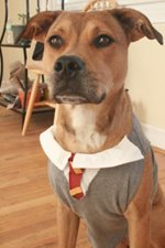 Harry Potter Dog Costume-6