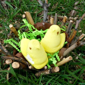 Cheep-Cheep Easter Nest Craft