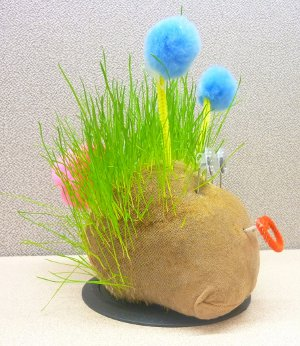 How to Create Your Very Own Chia Pet!