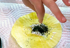 Cupcake Liner Sunflowers