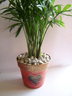 Nature Lover's Palm Pot