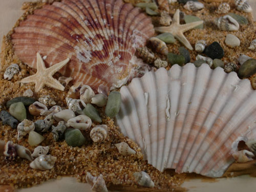 Close up of Shells on Box