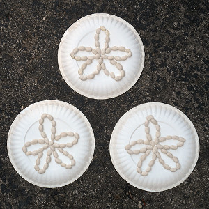 Beachy Plate Sand Dollars